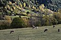 Vall de Sorteny (Ordino) - 38.jpg
