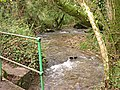 Valley Bottom Stream - geograph.org.uk - 380542.jpg