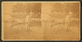 Vendor with a cart, Rocky Point , R.I, by J. H. Aylesworth.png