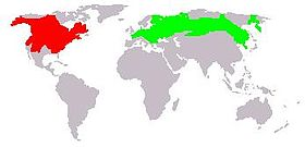 Muskrat range (native range in red, introduced range in green. Introduced range in South America not shown.)