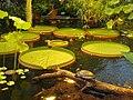 Victoria house - Oslo Botanical Garden - IMG 9017.jpg