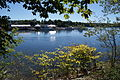 View of the Damariscotta River from the Main Street Bridge, Damariscotta, Maine - 20130919-01.JPG