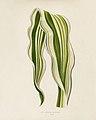 Vintage illustrations by Benjamin Fawcett for Shirley Hibberd digitally enhanced by rawpixel 83.jpg