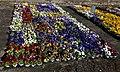 Viola flowers.jpg