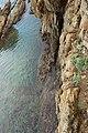 Vivier maritime de la Gaillarde à Roquebrune-sur-Argens le 10 février 2017 - 08.jpg