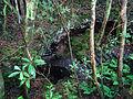 Volcanic Cave, Pico Island, Azores, Portugal (21543973580).jpg