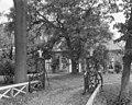 Voorgevel met grote boom ervoor, open hek - Hegebeintum - 20398902 - RCE.jpg