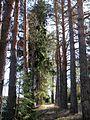 Vozhegodskiy r-n, Vologodskaya oblast', Russia - panoramio (78).jpg
