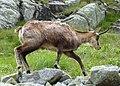 Vysoké Tatry, Dolina Bielej vody, cestou od Zeleného plesa na Jahňací štít (33).JPG