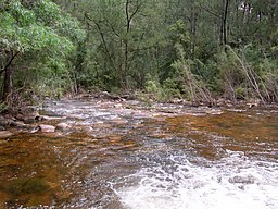 Wadbilliga River downstream.JPG