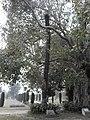 Wah Mughal Gardens in Punjab.jpg