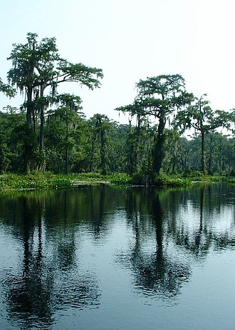 Wakulla Springs - Wakulla Springs as it empties into the Wakulla River