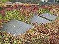 Walczyli pod sztandarami PPR zginęli na szubienicach z rąk Hitlerowców 16 X 1942 - Cmentarz Wojskowy na Powązkach (167).JPG