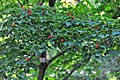 Wikipedia 13. Fotoworkshop Botanischer Garten Erlangen 2013 by-RaBoe 038.jpg