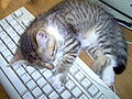Wikipedians cat.jpg