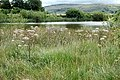 Wild Angelica by small reservoir west of Marsden - geograph.org.uk - 92436.jpg