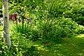 Wild garden2.jpg