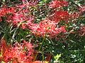Wildflower 001.jpg