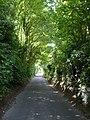 Wises Lane approaches Borden village - geograph.org.uk - 903163.jpg