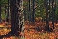 Wolf Tree (10148521974).jpg
