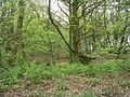 Woodhall Plantation - Woodhall Lane - geograph.org.uk - 789214.jpg