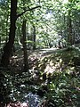 Woodland track near Pontrobert - geograph.org.uk - 899310.jpg