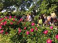 XLIV Zjazd Ogrodów Botanicznych.JPG