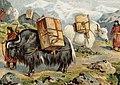 Yaks in Jaco, Tibet about 1900, Fleischextrakt 0002773 m (cropped).jpg