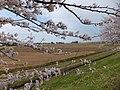 Yatsuomachi Nishijinzu, Toyama, Toyama Prefecture 939-2311, Japan - panoramio (18).jpg