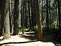Yosemite 2011 (5995335188).jpg