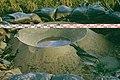 ZandmeevoerendeWel.jpg