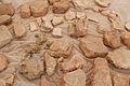 Çatalhöyük 2008 DSC 0010 (2721590621).jpg