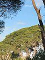 Δάσος Στροφυλιας 2.jpg