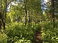Берёзовая аллея в парке.jpg
