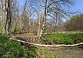 Бобровая плотина в крюковском лесничестве.jpg