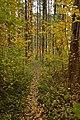 Ботанічний сад осінь.jpg