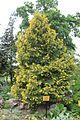 Ботанічний сад IMG 8330 04.jpg