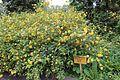 Ботанічний сад IMG 8330 06.jpg