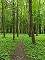 Весняна стежка в парку.jpg