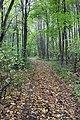 Дубрава Большая Матыра - 4.jpg