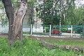 Дуб и отломанный сук на улице Коминтерна.jpg