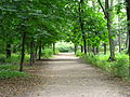 Зеленый коридор.JPG