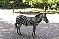 Киевский зоопарк (25).jpg