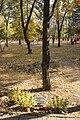 Меморіальний цвинтар 12-101-0112 14.jpg