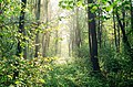 Октябрьский лес после грозы. Волынь 1998 год. - panoramio.jpg