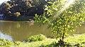 """Парк """"Нивки"""", озеро №2.jpg"""
