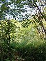 """Парк шума """"Гази Баба"""" 23.jpg"""