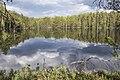 Печоро-Илычский заповедник. Лесное озеро MG 8702.jpg