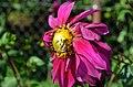 Пчела и цветок.JPG