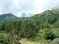 Седловината между Хвойнати връх-ляво- и вр.Вихрен - panoramio.jpg